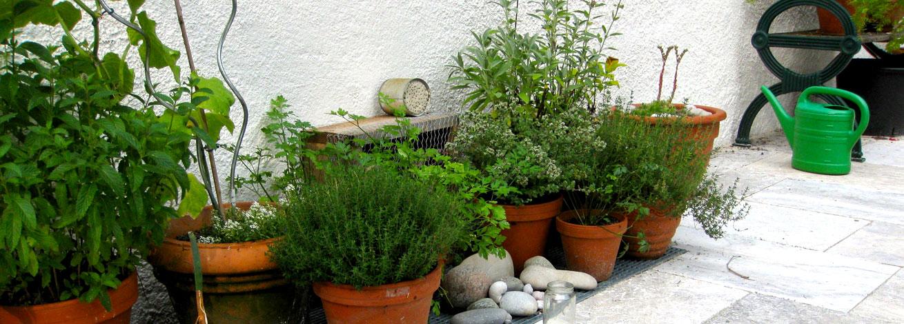 Inspirationen Kräutergarten vom GartenBaur