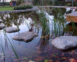 Herbstarbeiten am Teich druch GartenBaur