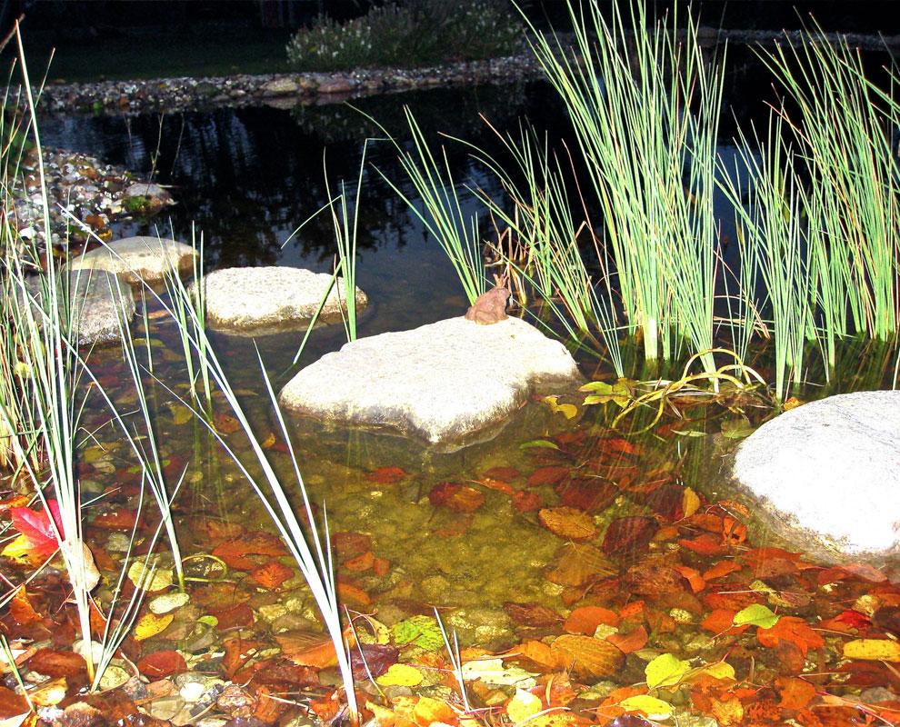 Teichbau gartenbaur der landschaftsarchitekt for Steine im teich
